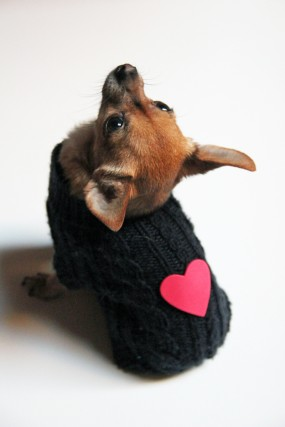 valentine-dog-sweater
