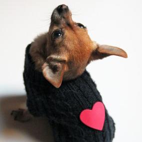 valentine-dog-sweater-285x427