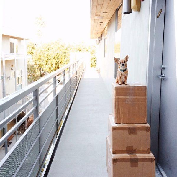 Small Dog Big Box