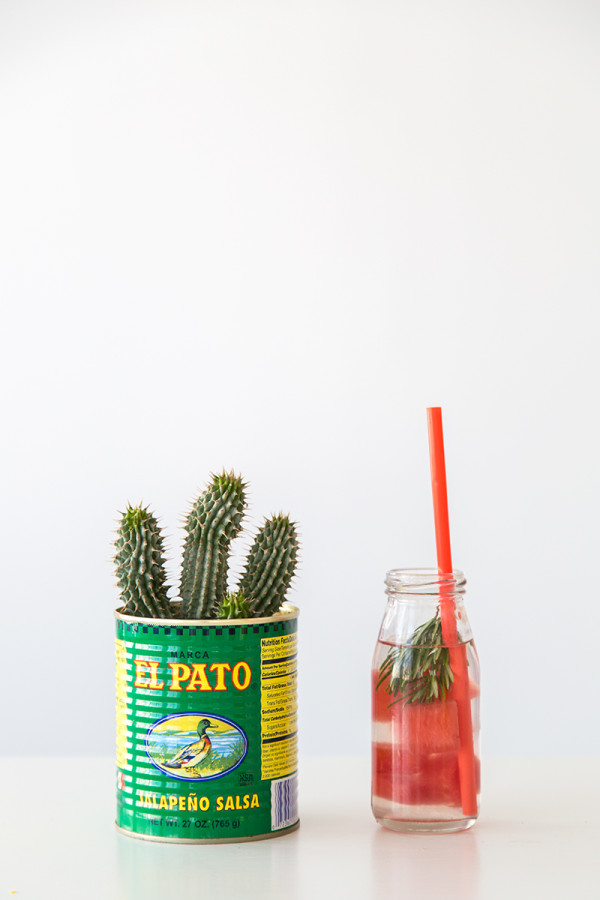 Cactus in a Can