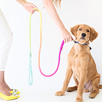 DIY-Technicolor-Dog-Leash-thumb