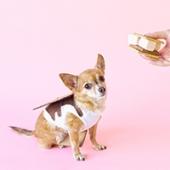 DIY S'mores Dog Costume